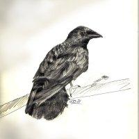 [Nsùmwìnù] La cultivatrice et le corbeau